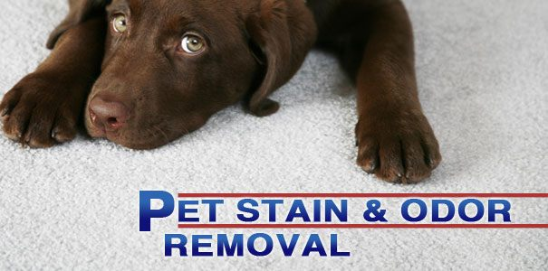 feature-pet-stain-odor-removal