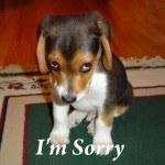 sorry dog