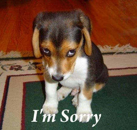 sorry_dog