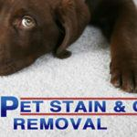 feature pet stain odor removal